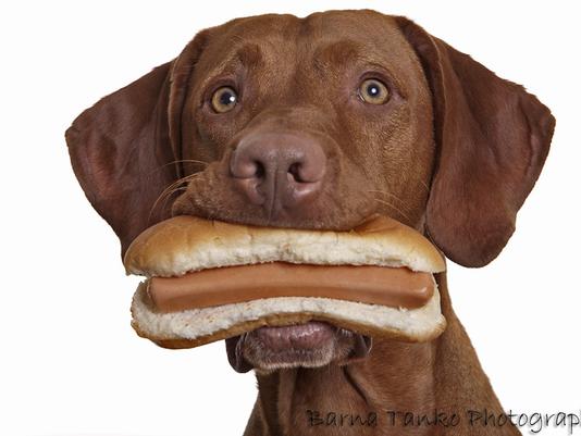 636607766499209296-hot-dog-dog.png