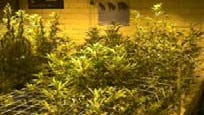Pinal County Sheriff's deputies shut down what they said was an illegal grow operation in Oracle in April 2015.