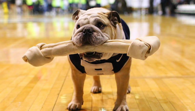 Butler Bulldogs mascot Blue 2 stands on the court before the game against the Xavier Musketeers at Hinkle Fieldhouse.