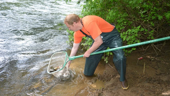 Ben Walczak releases trout into the South Yamhill River in 2015.