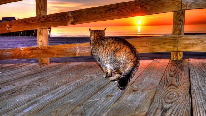 A cat on the Seaside boardwalk at sunrise.