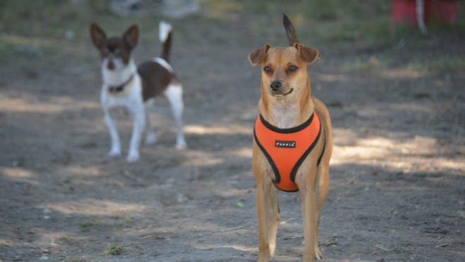 The Palm Springs Dog Park will close for 90 days starting next week.