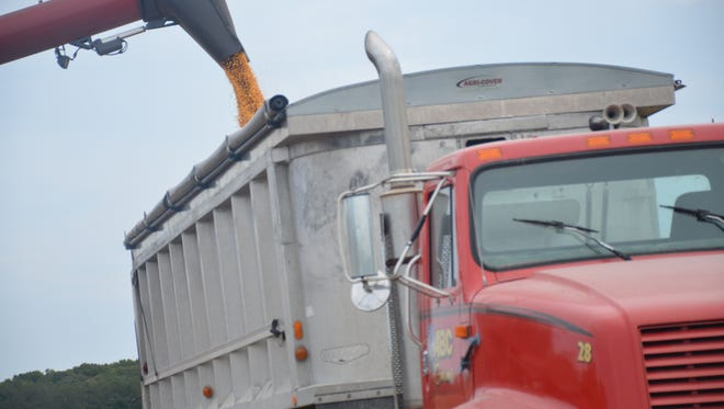 Harvested corn is loaded into a truck for transportation in Georgetown.