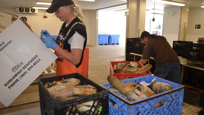 Suquamish Seafoods plant worker Eric Greer prepares geoduck for shipping.