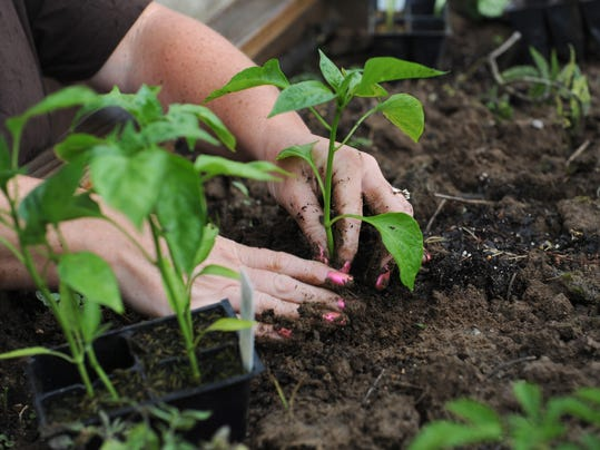 Produce from local garden will go to Christ's Table