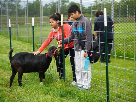 Sixth graders Yemlieth Rodriguez and Nicolas Torres-Garcia pet a goat that agriculture students at William Penn High School are raising. Goats could become emotional support animals in Wilmington if a new law is passed.