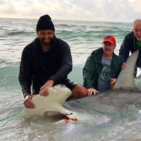 Former Ice Flyers goalie helps snag pair of monster sharks off Pensacola Beach