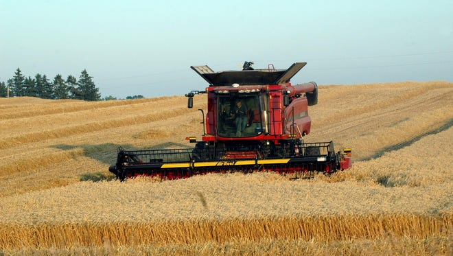 This year's harvest of winter  harvest is running nearly a week ahead of last year.