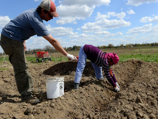 Ben Sommers, Lansing Roots program manager, hands Devi Dahal potatoes to plant Friday at the Greater Lansing Food Bank's community garden. The potatoes being planted will be used for the program's CSA boxes.
