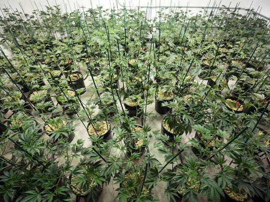 SierraWellness CultivationCenter-5