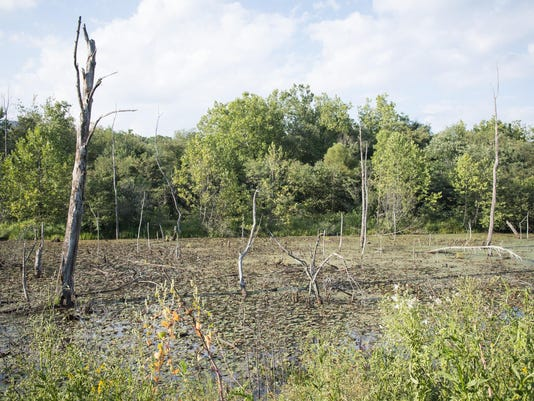 BMN 090315 Swannanoa Swamps
