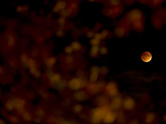 NOVI - SEPTEMBER 27: Blood moon seen through a tree changing color for fall Sunday, September 25, 2015 in metro Detroit. (Photo by Bryan Mitchell/Special to The Detroit News)