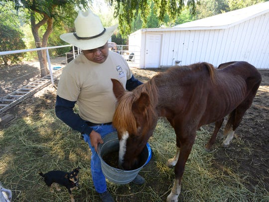 Jess Ahumada Jr. is hoping his work with abandoned and owner-surrendered horses will save the lives of the animals he's caring for at A and F Equine Rescue.