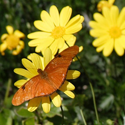 This is the final week to see hundreds of butterflies