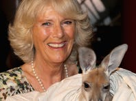 Camilla Duchess of Cornwall holds a baby kangaroo during a visit to the Australian Outback.