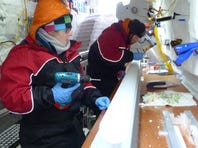 In this Nov. 22, 2012 photo released by scientist Nancy Bertler, doctoral students, Holly Winton, left, and Aja Ellis, work on an ice core on Roosevelt Island, Antarctica.