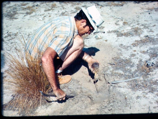 Turner Collins collecting a plant specimen in the Arizona
