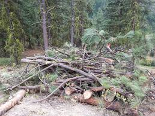 Residents in unincorporated areas of Lincoln County are complaining about the lack fo service to pick up forest debris cut and collected from their yards.