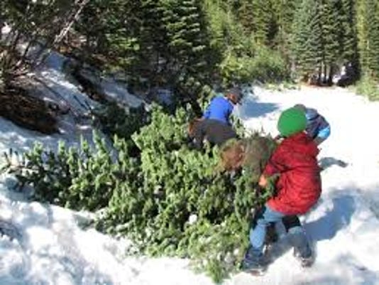 kids cut chrismas tree