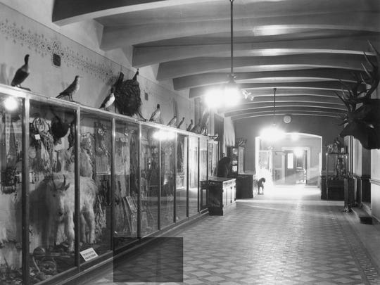 The Montana Historical Society collections were moved from Virginia City to Helena when the capitol was relocated. This photo shows MHS exhibits in 1902 in the current State Capitol when it opened in that year.