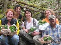 Volunteers needed to pluck garlic mustard from Roan Mountain