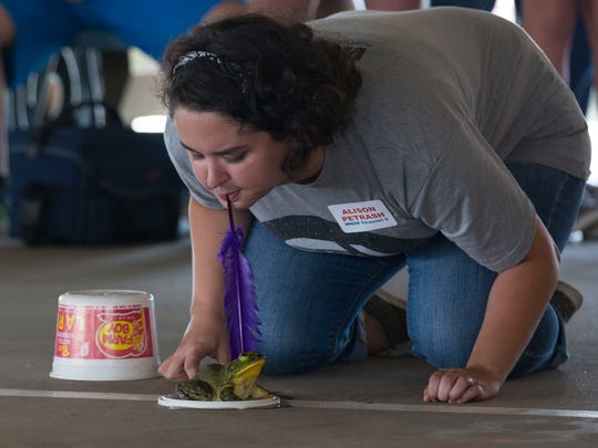 Alison Petrash tries to get her frog to hop forward