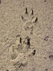 Wolf&Pup 3.jpg