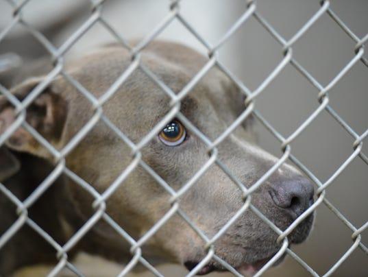 636076458013985286-tda.Animal.Shelter.08.24-4628.jpg