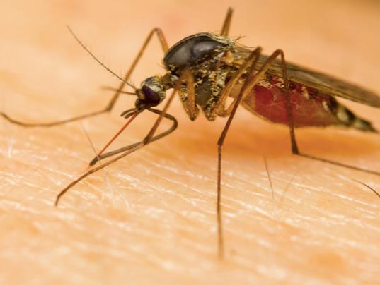 Terminix-mosquito.png