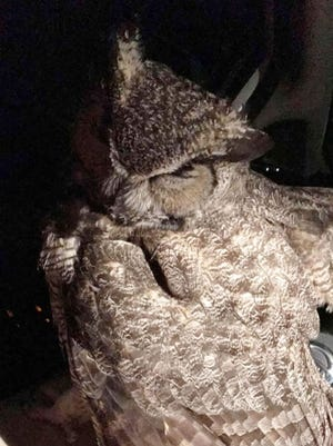 An owl trapped a Good Samaritan in her car after she tried to rescue the owl Monday, May 7, 2018. The owl latched onto the woman and the car's steering wheel.