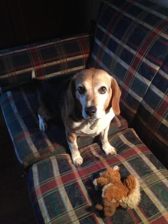 Carol beagle.jpg