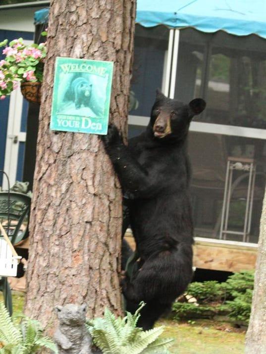 Bear Moore-1.jpeg