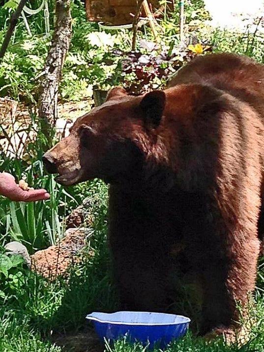 REN1223 Incline bears1.JPG