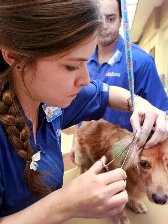 Pets-Dog Do Overs - grooming