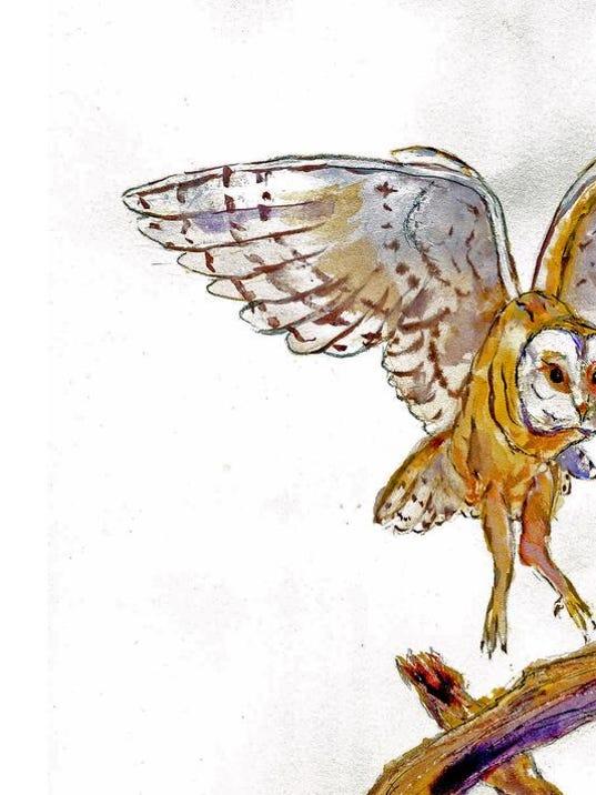 owl drawing 2.jpg