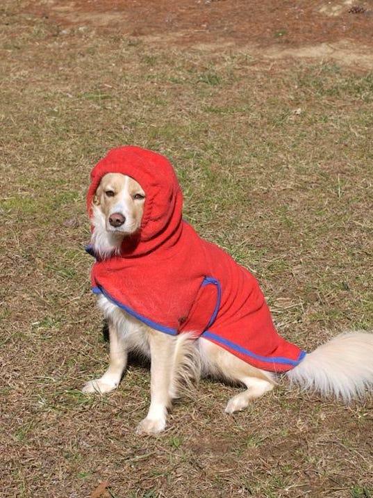 Dog In Coat.jpg