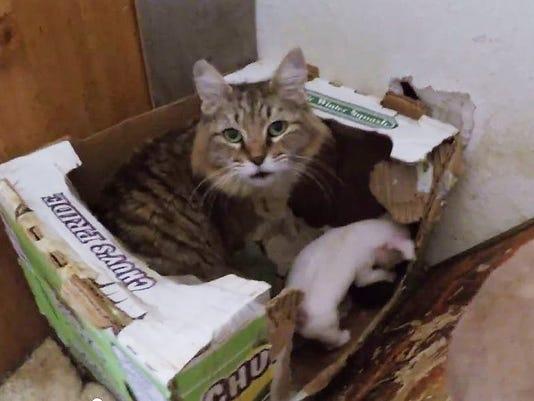 635641257356355556-cat-puppies-2