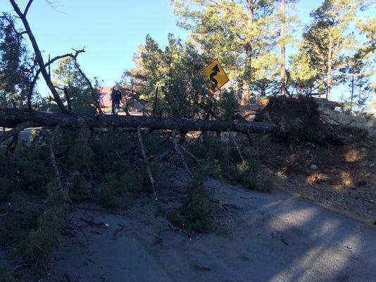 635935568999117008-downed-tree.JPG