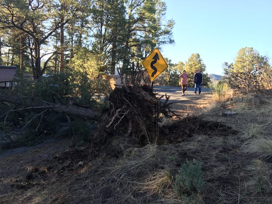 Gusty winds topple tree