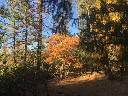Sunlight brightens fall colors at McArthur-Burney Falls