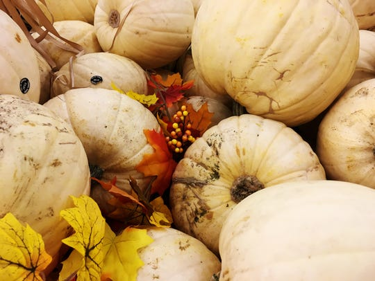Pumpkins with pale rinds stand out as Halloween decorations.