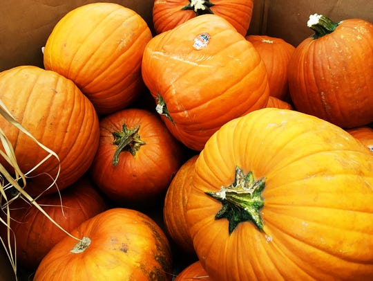 Some bring home misshapen pumpkins, finding them more
