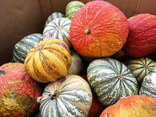 Pumpkin selection is a personal choice. Check out pumpkins of various shapes, sizes, colors and textures along your journey to a perfect pumpkin.