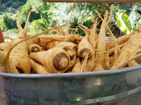 Parsnips from Aardvark Farm.