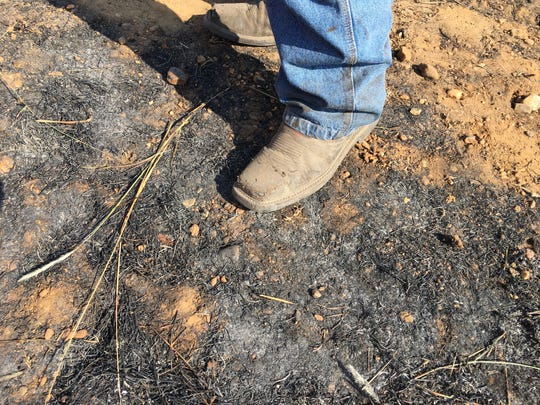 Hunter Holloman stands on the scorched ground after a grass fire was extinguished Nov. 15, 2016.