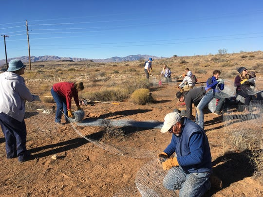 Dozens of volunteers showed up to help with a habitat restoration project in the Red Cliffs Desert Reserve on Saturday, Nov. 19, 2016.