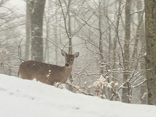 636165421137891772-Grandfather-Mountain-deer.JPG