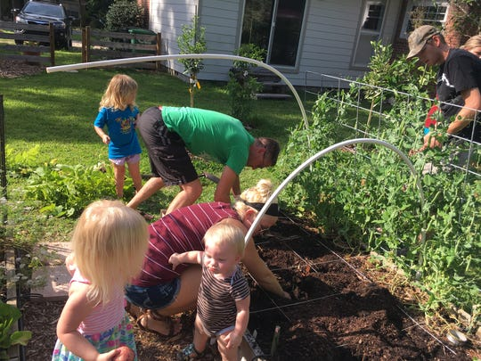 Some of the Piotrowski family digging potatoes and picking peas.