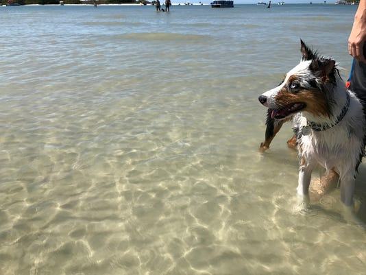 20 pet-friendly things to do in Southwest Florida