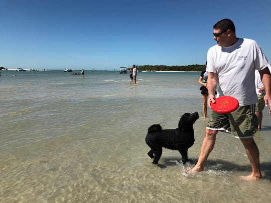 This dog and his owner play fetch with the Frisbee. They usually spend around two hours at the Bonita Beach Dog Park playing in the water.
